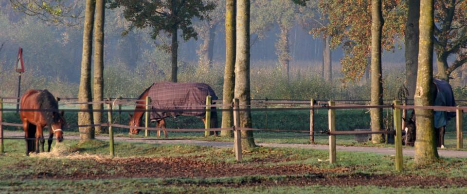 http://www.delangewilm.nl/wp-content/uploads/IMG_7203-960x400.jpg